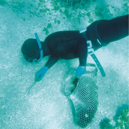oursin de mer 3