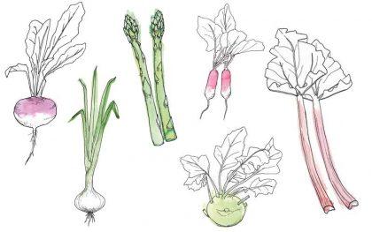 Fruits et légume de printemps