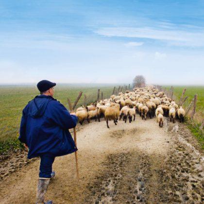 agneau pré salé