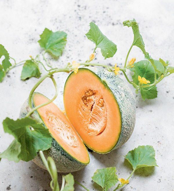 melon 3