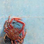 araignée de mer crustacés