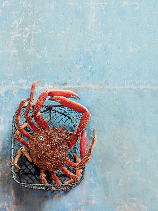 araignée de mer 3
