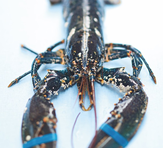cuisson du homard bleu