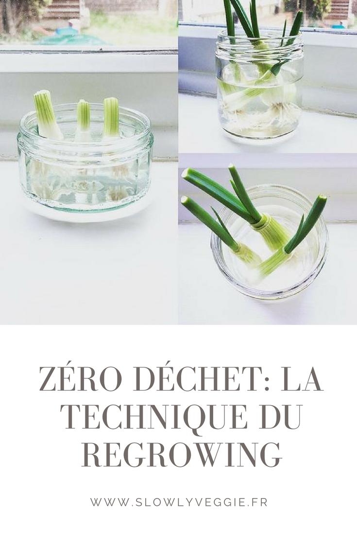 zéro déchet : la technique du regrowing pour faire pousser des légumes