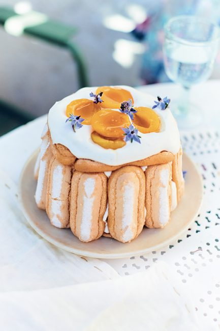 recette de charlotte aux abricots et à la fleur d'oranger