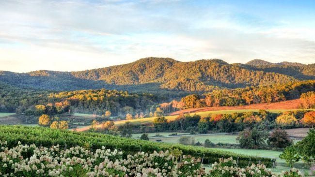 Vignobles de la Virginie